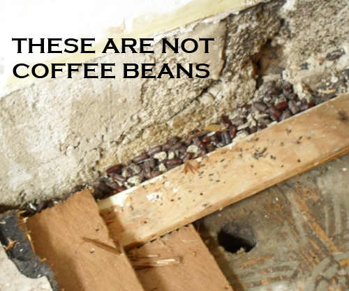 Not_coffee_beans