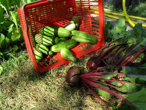 July2012 produce