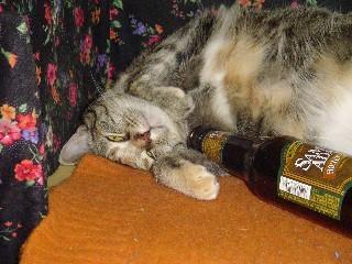 Drunk_kitty_2